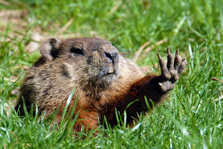 groundhogs2